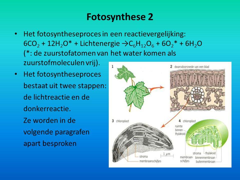 Fotosynthese 2 Het fotosyntheseproces in een reactievergelijking: 6CO 2 + 12H 2 O* + Lichtenergie →C 6 H 12 O 6 + 6O 2 * + 6H 2 O (*: de zuurstofatome