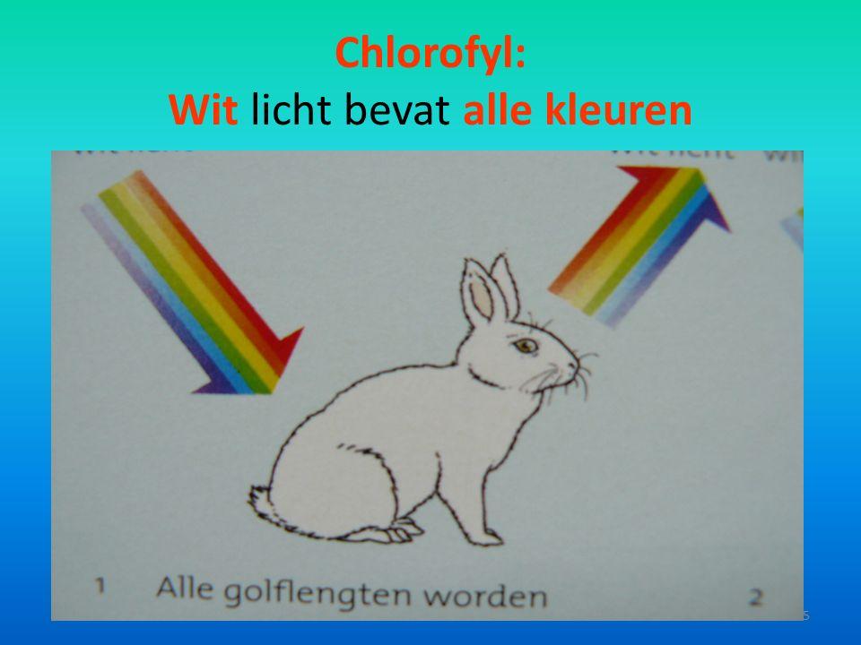 Chlorofyl: Wit licht bevat alle kleuren 5