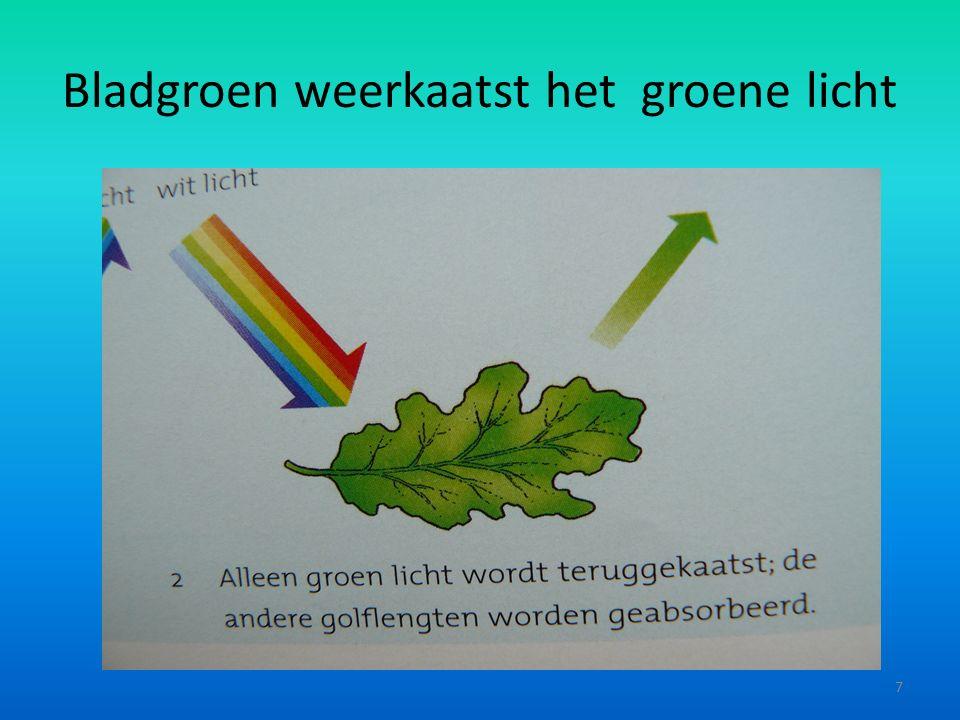 Bladgroen weerkaatst het groene licht 7