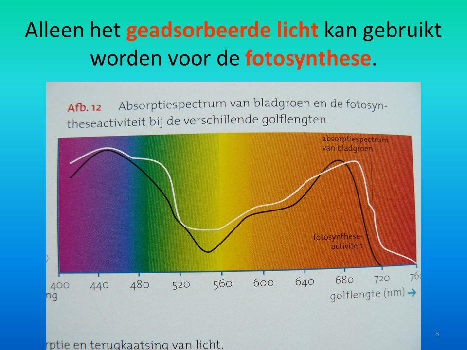 Alleen het geadsorbeerde licht kan gebruikt worden voor de fotosynthese. 8