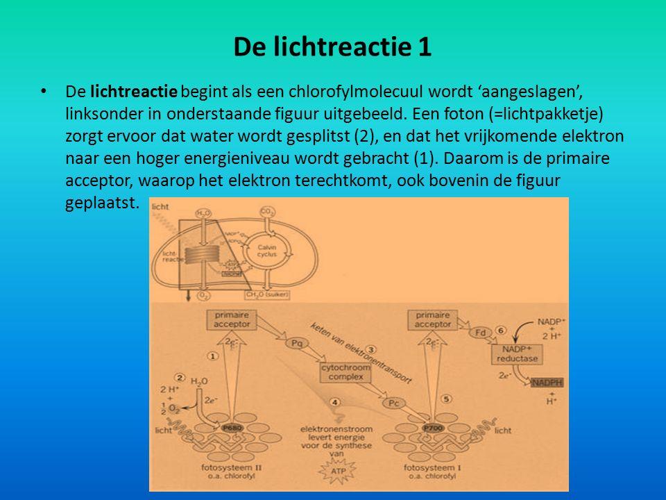 De lichtreactie 1 De lichtreactie begint als een chlorofylmolecuul wordt 'aangeslagen', linksonder in onderstaande figuur uitgebeeld. Een foton (=lich