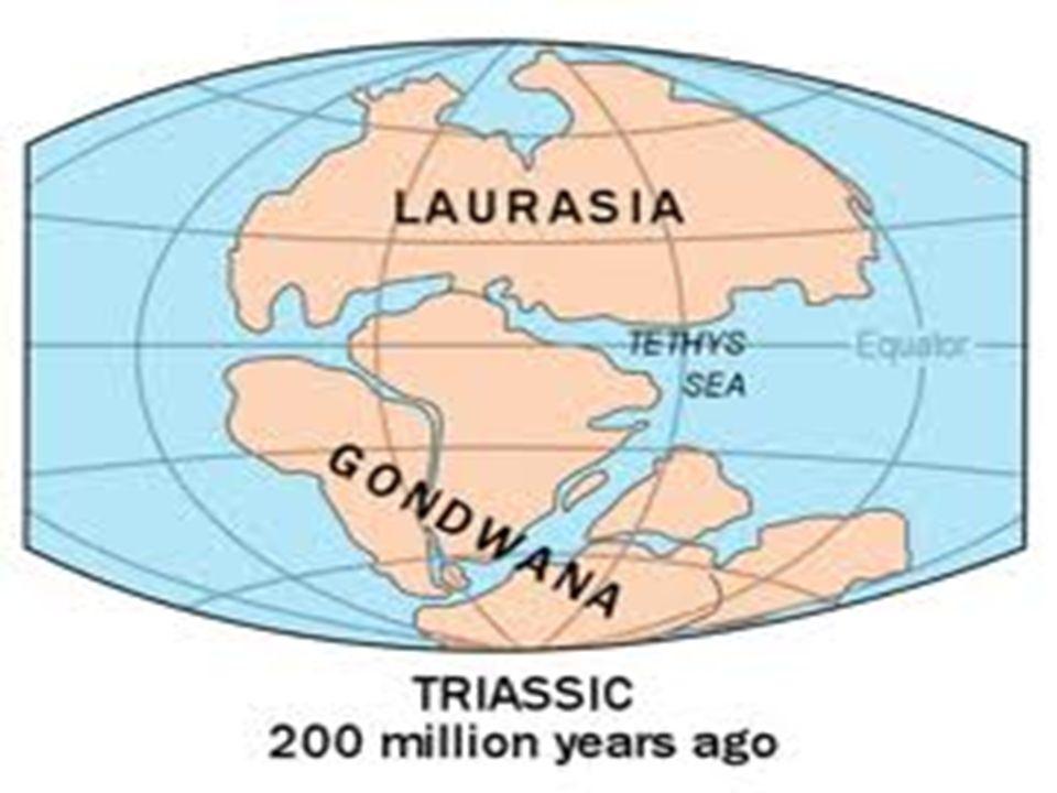 Geschiedenis GONDWANA
