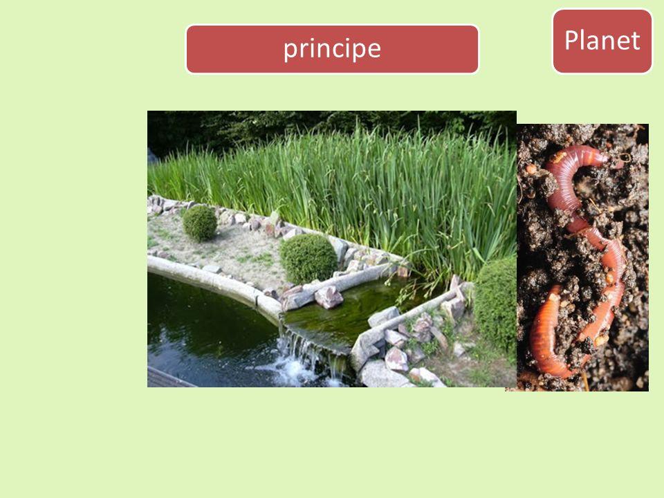 Planet principe Gezond bodemleven bevorderen. Zoveel mogelijk gebruik van biologische hulpbronnen.