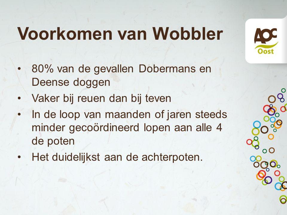 Voorkomen van Wobbler 80% van de gevallen Dobermans en Deense doggen Vaker bij reuen dan bij teven In de loop van maanden of jaren steeds minder gecoö