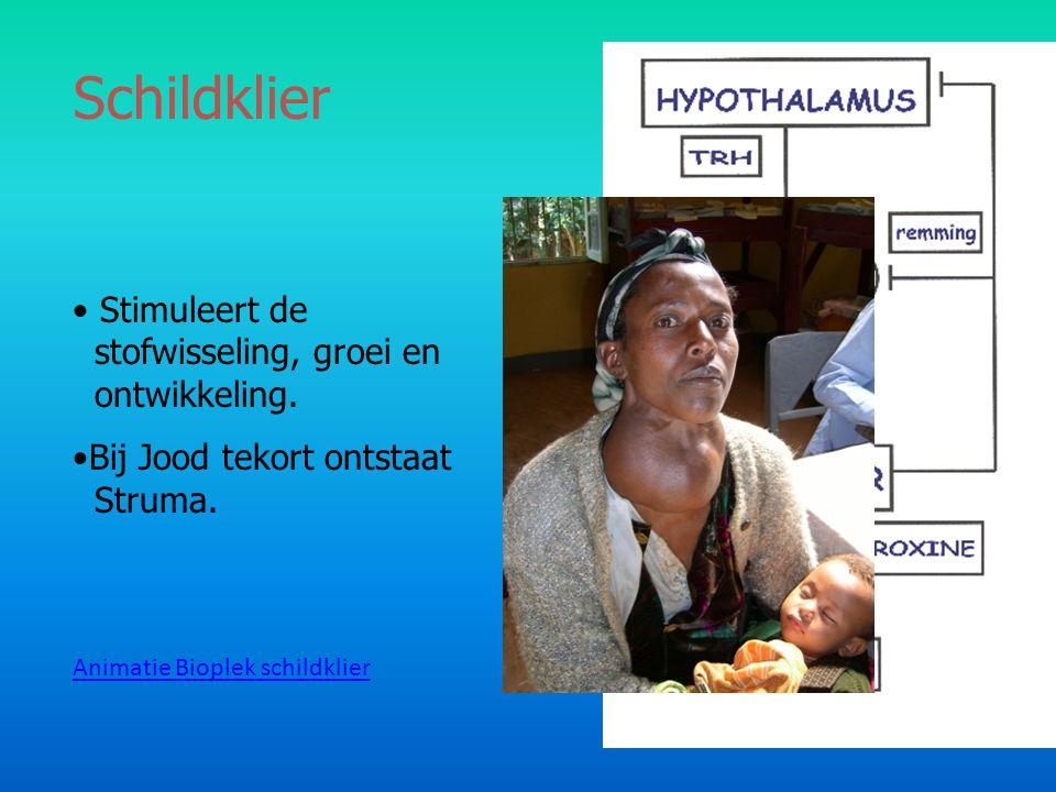 Schildklier Stimuleert de stofwisseling, groei en ontwikkeling. Bij Jood tekort ontstaat Struma. Animatie Bioplek schildklier