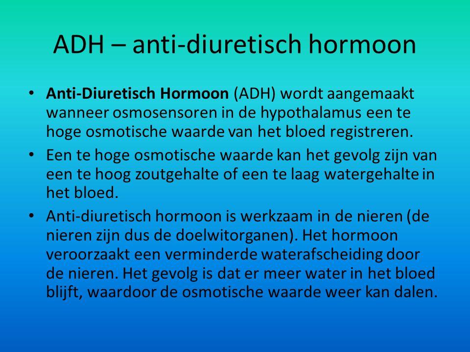 ADH – anti-diuretisch hormoon Anti-Diuretisch Hormoon (ADH) wordt aangemaakt wanneer osmosensoren in de hypothalamus een te hoge osmotische waarde van