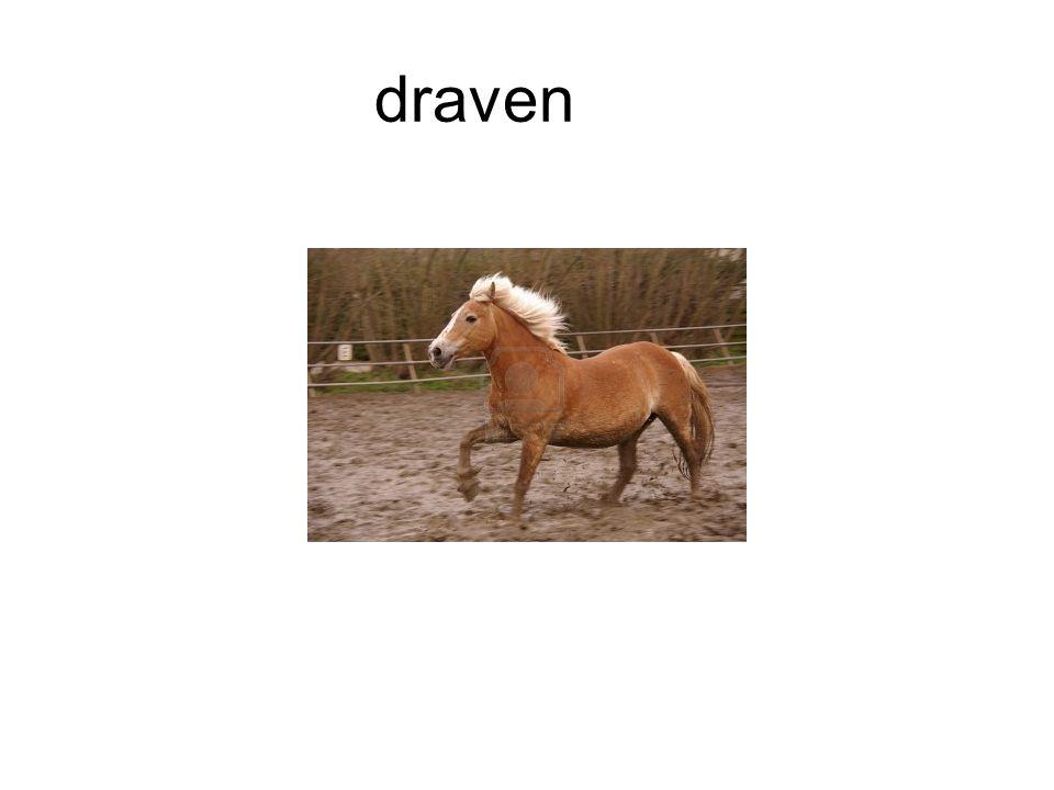 draven
