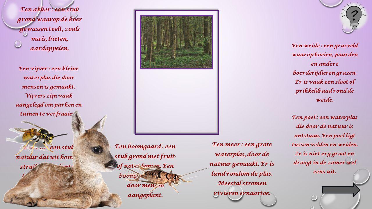 Een bos : een stuk natuur dat uit bomen, struiken en planten bestaat.