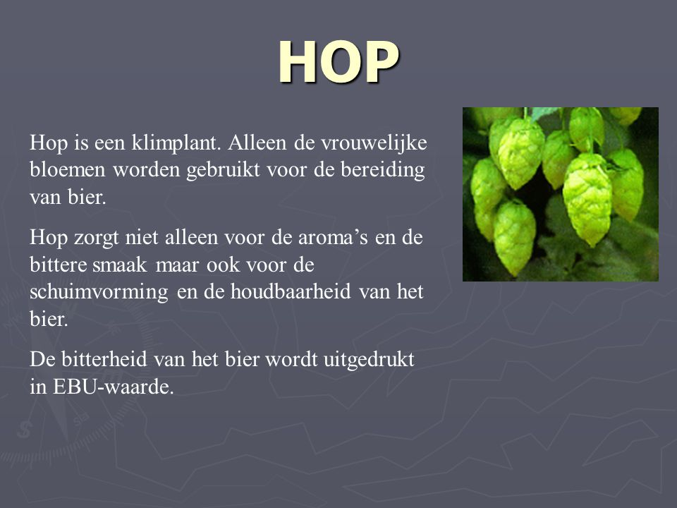 HOP Hop is een klimplant. Alleen de vrouwelijke bloemen worden gebruikt voor de bereiding van bier.