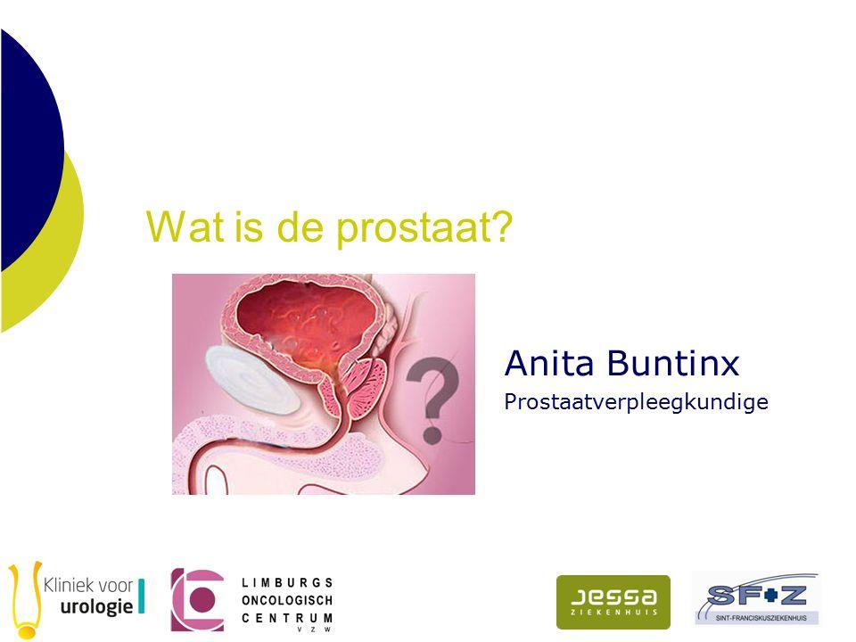 Wat is de prostaat? Anita Buntinx Prostaatverpleegkundige