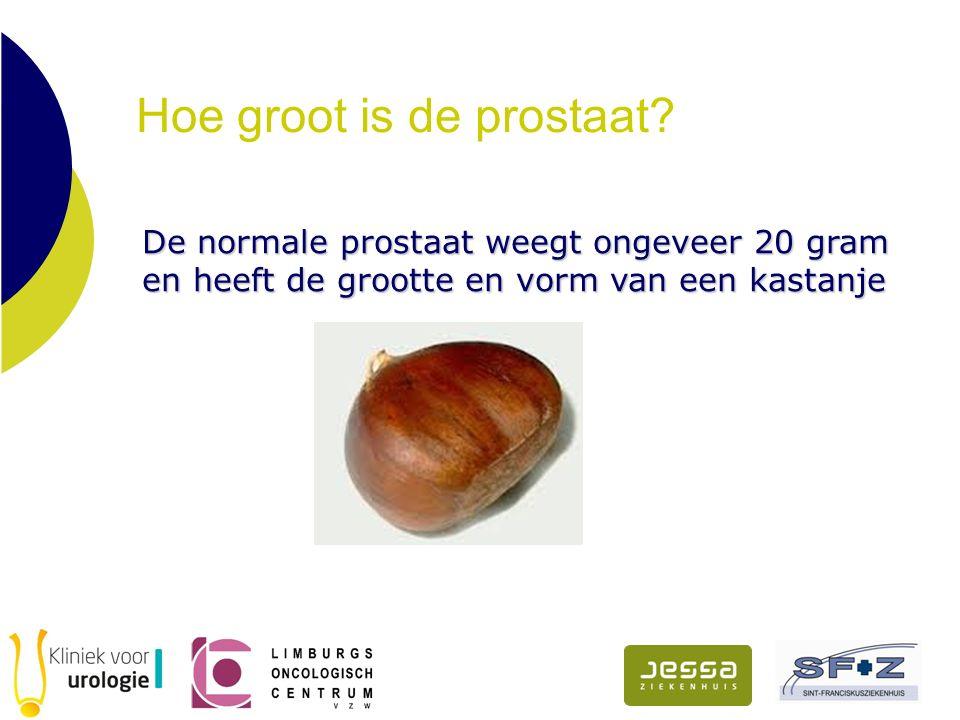 Hoe groot is de prostaat? De normale prostaat weegt ongeveer 20 gram en heeft de grootte en vorm van een kastanje