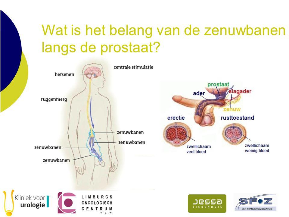 Wat is het belang van de zenuwbanen langs de prostaat?