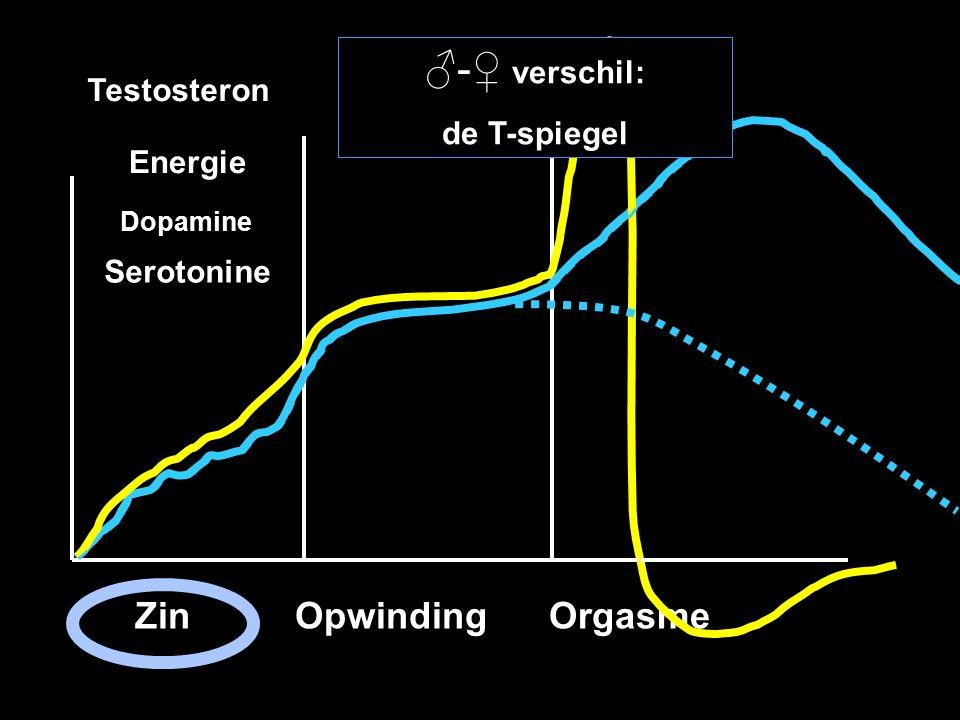 Zin Opwinding Orgasme Zin Opwinding Orgasme Testosteron Dopamine Serotonine Energie ♂-♀ verschil: de T-spiegel