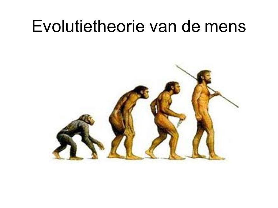 Evolutietheorie van de mens
