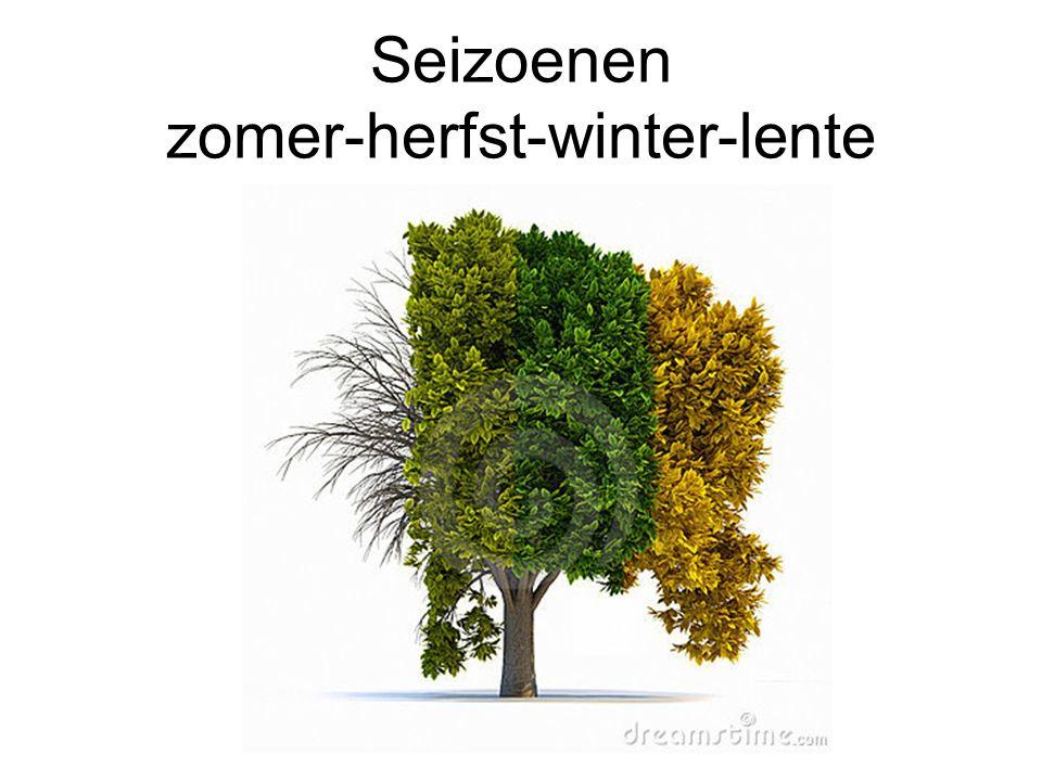 Seizoenen zomer-herfst-winter-lente