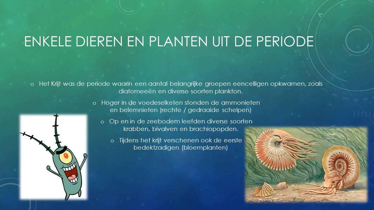 ENKELE DIEREN EN PLANTEN UIT DE PERIODE o Het Krijt was de periode waarin een aantal belangrijke groepen eencelligen opkwamen, zoals diatomeeën en diverse soorten plankton.