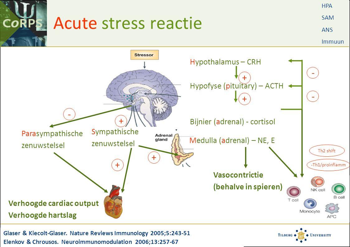 Acute stress reactie Glaser & Kiecolt-Glaser. Nature Reviews Immunology 2005;5:243-51 Elenkov & Chrousos. Neuroimmunomodulation 2006;13:257-67 Hypotha
