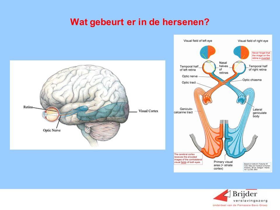 Wat gebeurt er in de hersenen?