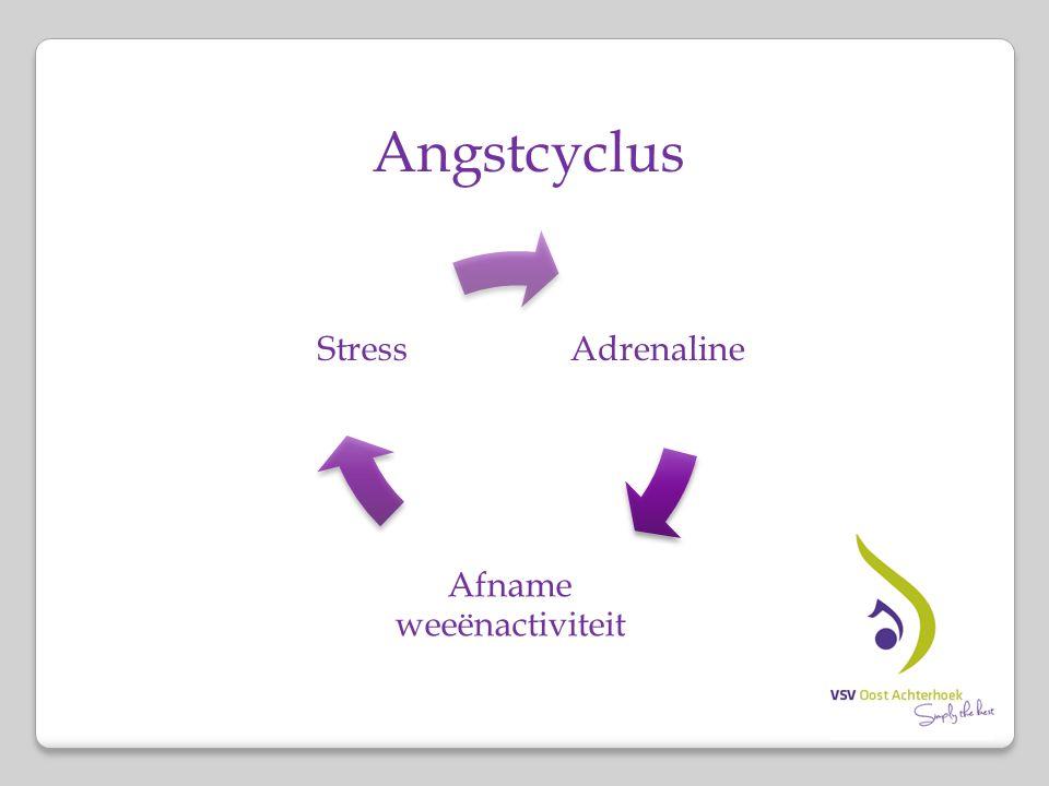 Angstcyclus Adrenaline Afname weeënactiviteit Stress
