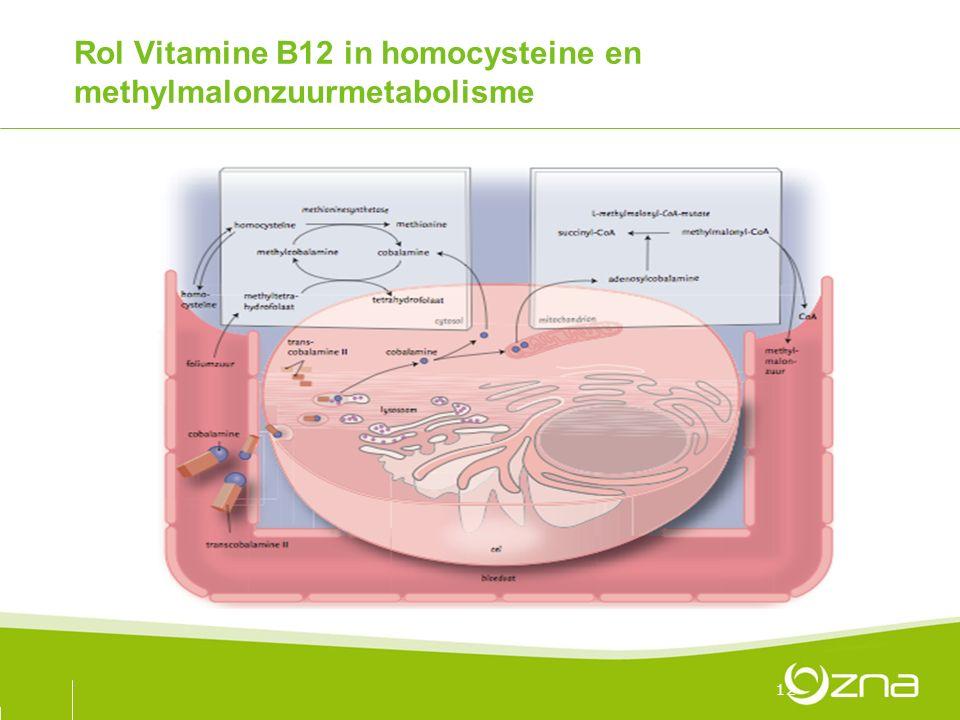 Rol Vitamine B12 in homocysteine en methylmalonzuurmetabolisme 12