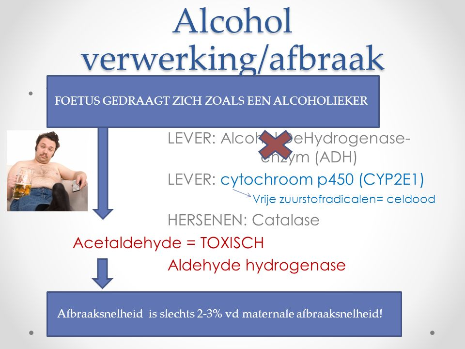 Alcohol verwerking/afbraak Waarom is alcohol toxisch? o Alcohol (ETHANOL) LEVER: Alcohol DeHydrogenase- enzym (ADH) LEVER: cytochroom p450 (CYP2E1) Vr