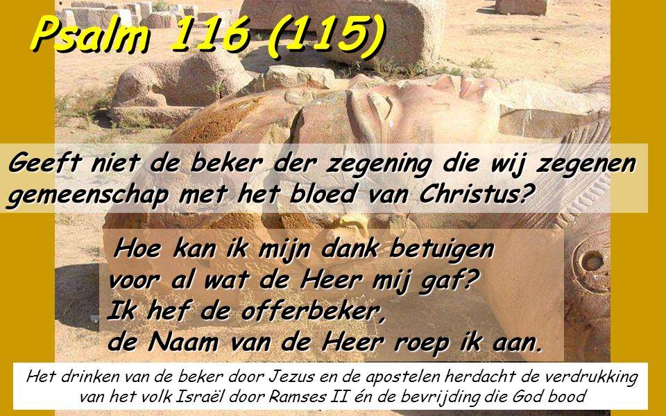 Het drinken van de beker door Jezus en de apostelen herdacht de verdrukking van het volk Israël door Ramses II én de bevrijding die God bood Psalm 116 (115) Geeft niet de beker der zegening die wij zegenen gemeenschap met het bloed van Christus.