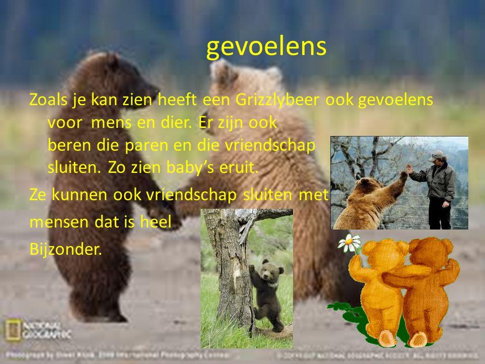 gevoelens Zoals je kan zien heeft een Grizzlybeer ook gevoelens voor mens en dier. Er zijn ook beren die paren en die vriendschap sluiten. Zo zien bab