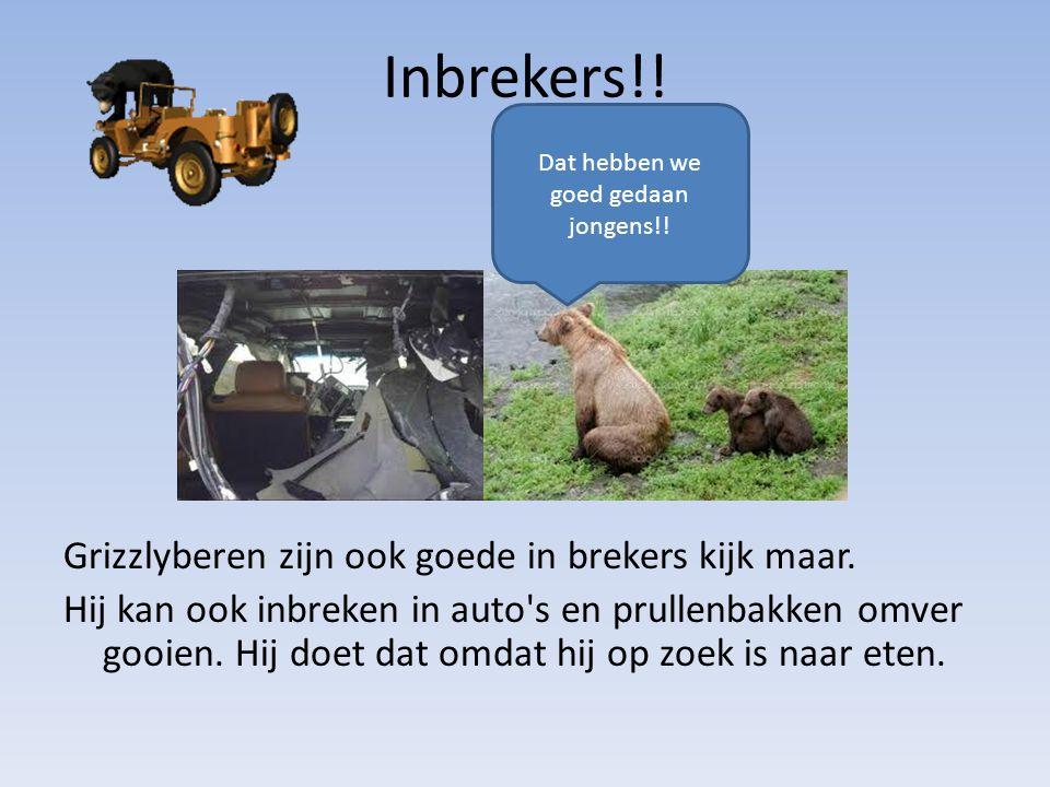 Grizzlyberen zijn ook goede in brekers kijk maar. Hij kan ook inbreken in auto's en prullenbakken omver gooien. Hij doet dat omdat hij op zoek is naar