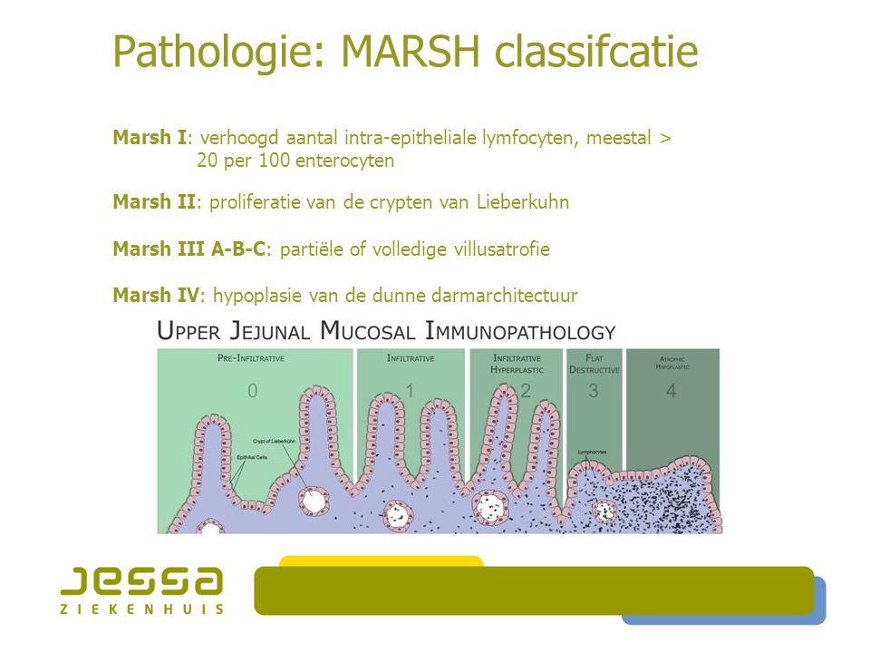 Pathologie: MARSH classifcatie Marsh I: verhoogd aantal intra-epitheliale lymfocyten, meestal > 20 per 100 enterocyten Marsh II: proliferatie van de c