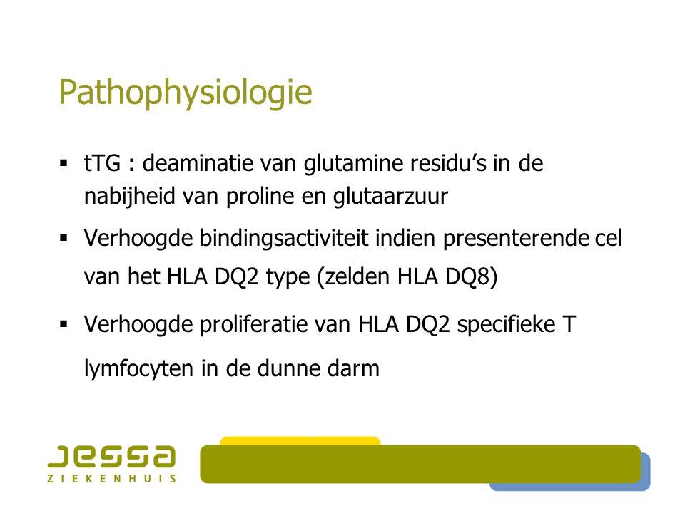 Pathophysiologie  tTG : deaminatie van glutamine residu's in de nabijheid van proline en glutaarzuur  Verhoogde bindingsactiviteit indien presentere