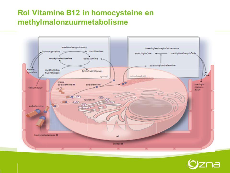 Rol Vitamine B12 in homocysteine en methylmalonzuurmetabolisme 19