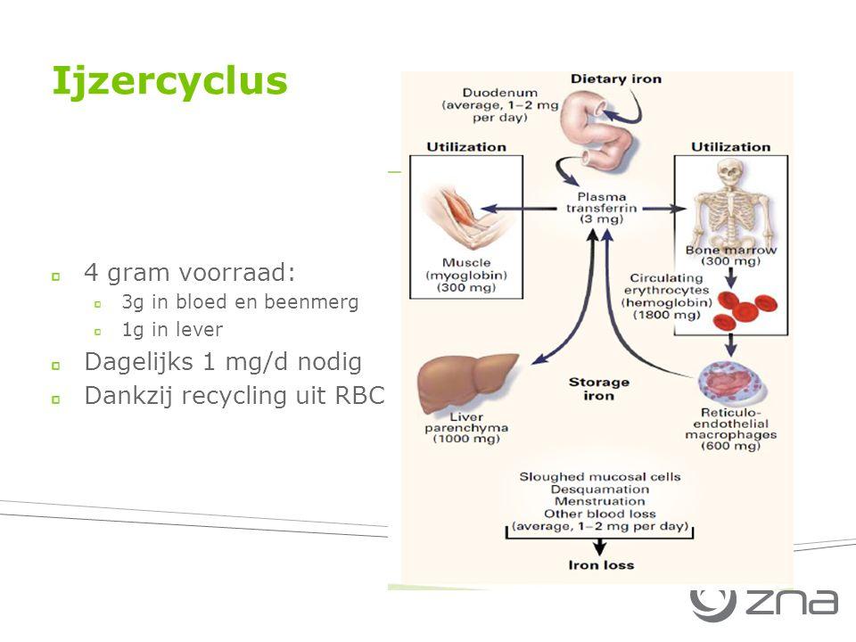 Ijzercyclus 4 gram voorraad: 3g in bloed en beenmerg 1g in lever Dagelijks 1 mg/d nodig Dankzij recycling uit RBC