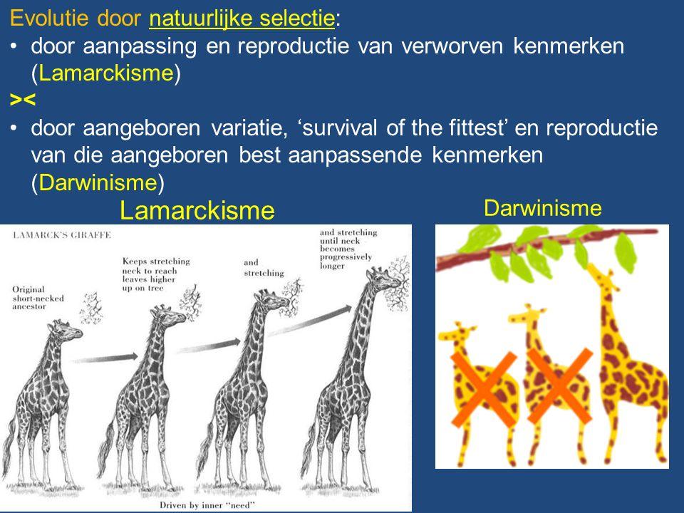 Lamarckisme Darwinisme Evolutie door natuurlijke selectie: door aanpassing en reproductie van verworven kenmerken (Lamarckisme) >< door aangeboren variatie, 'survival of the fittest' en reproductie van die aangeboren best aanpassende kenmerken (Darwinisme)