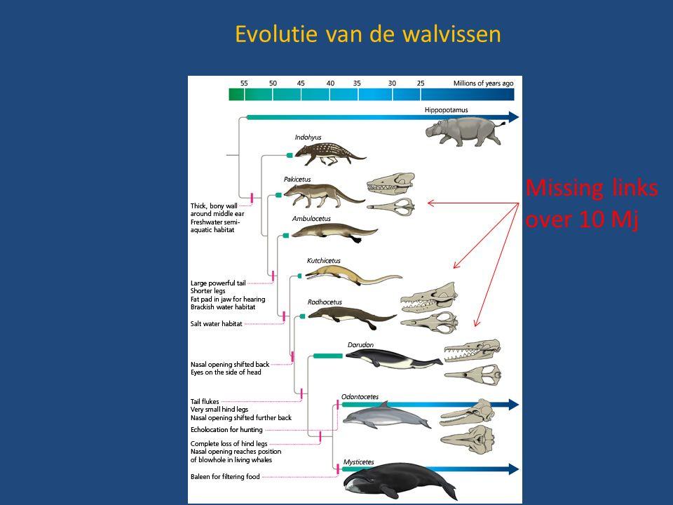 Evolutie van de walvissen Missing links over 10 Mj