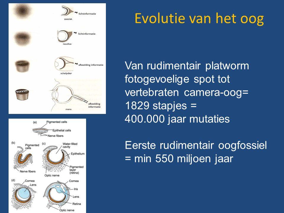Evolutie van het oog Van rudimentair platworm fotogevoelige spot tot vertebraten camera-oog= 1829 stapjes = 400.000 jaar mutaties Eerste rudimentair oogfossiel = min 550 miljoen jaar