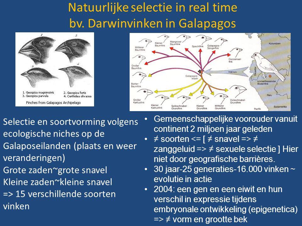 Natuurlijke selectie in real time bv.