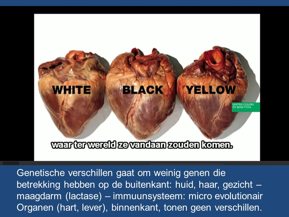 Genetische verschillen gaat om weinig genen die betrekking hebben op de buitenkant: huid, haar, gezicht – maagdarm (lactase) – immuunsysteem: micro evolutionair Organen (hart, lever), binnenkant, tonen geen verschillen.