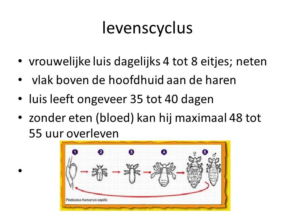 levenscyclus vrouwelijke luis dagelijks 4 tot 8 eitjes; neten vlak boven de hoofdhuid aan de haren luis leeft ongeveer 35 tot 40 dagen zonder eten (bloed) kan hij maximaal 48 tot 55 uur overleven