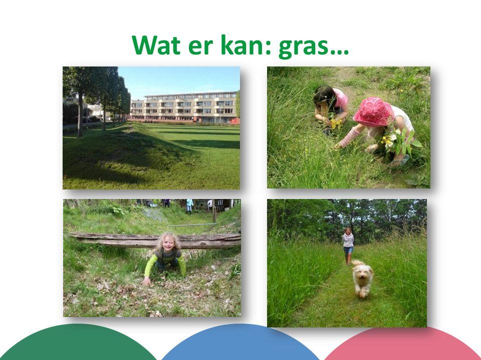 Wat er kan: gras…