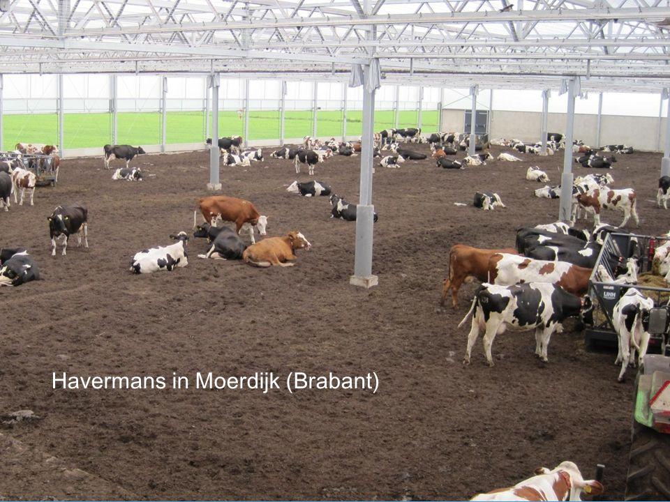 Havermans in Moerdijk (Brabant)