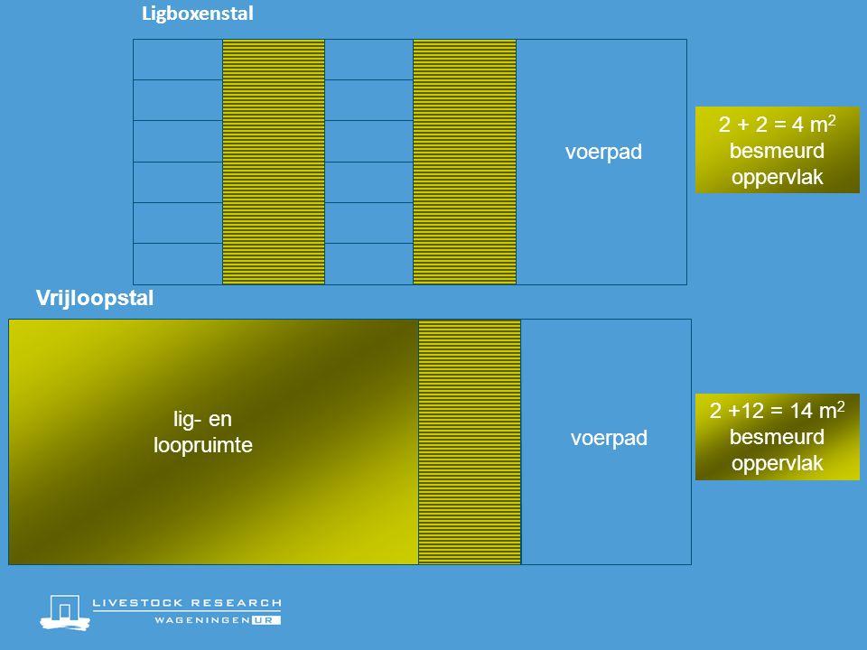 Ligboxenstal voerpad Vrijloopstal 2 +12 = 14 m 2 besmeurd oppervlak voerpad lig- en loopruimte 2 + 2 = 4 m 2 besmeurd oppervlak