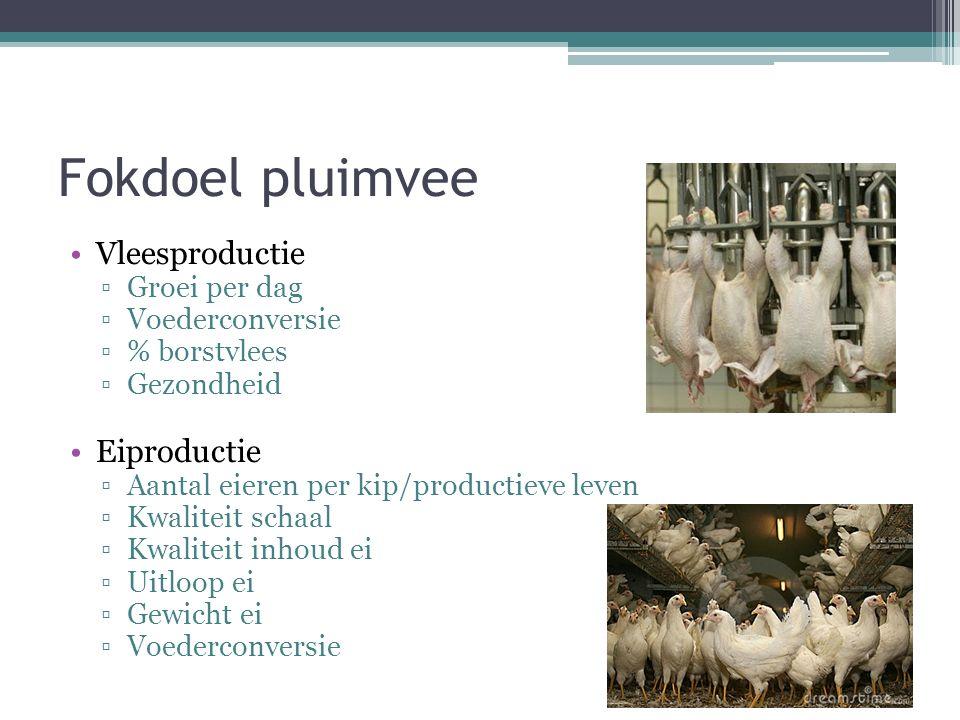 Fokdoel pluimvee Vleesproductie ▫Groei per dag ▫Voederconversie ▫% borstvlees ▫Gezondheid Eiproductie ▫Aantal eieren per kip/productieve leven ▫Kwaliteit schaal ▫Kwaliteit inhoud ei ▫Uitloop ei ▫Gewicht ei ▫Voederconversie