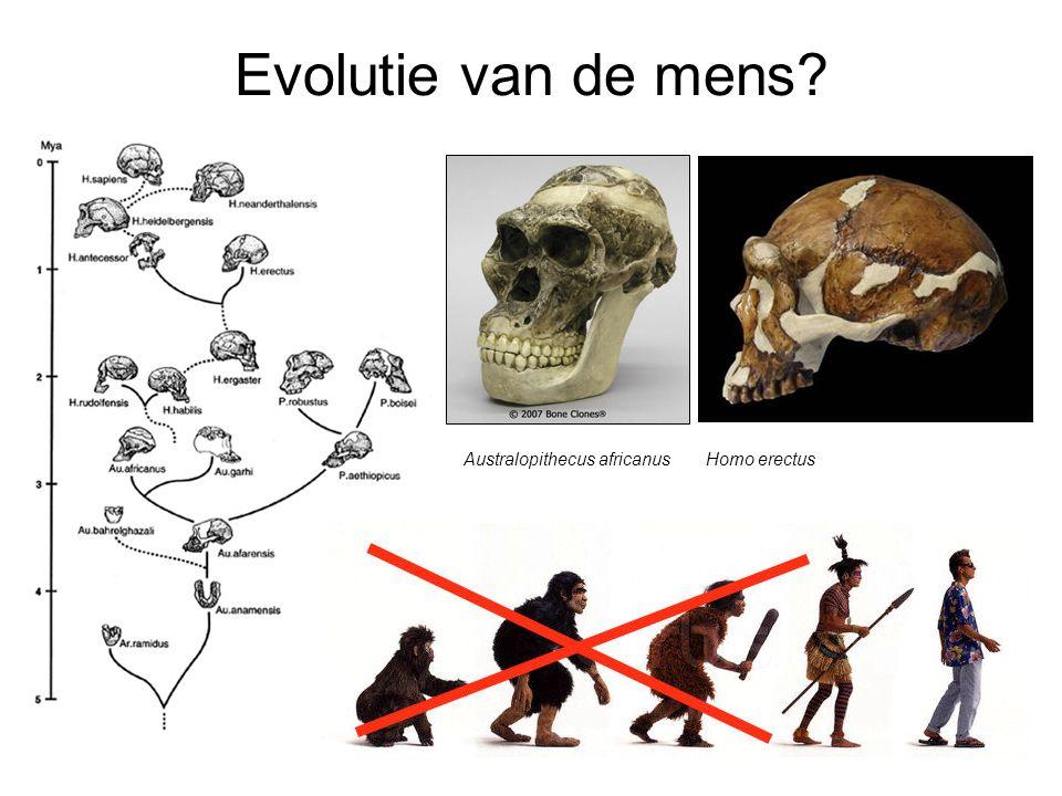 Evolutie van de mens? Australopithecus africanus Homo erectus