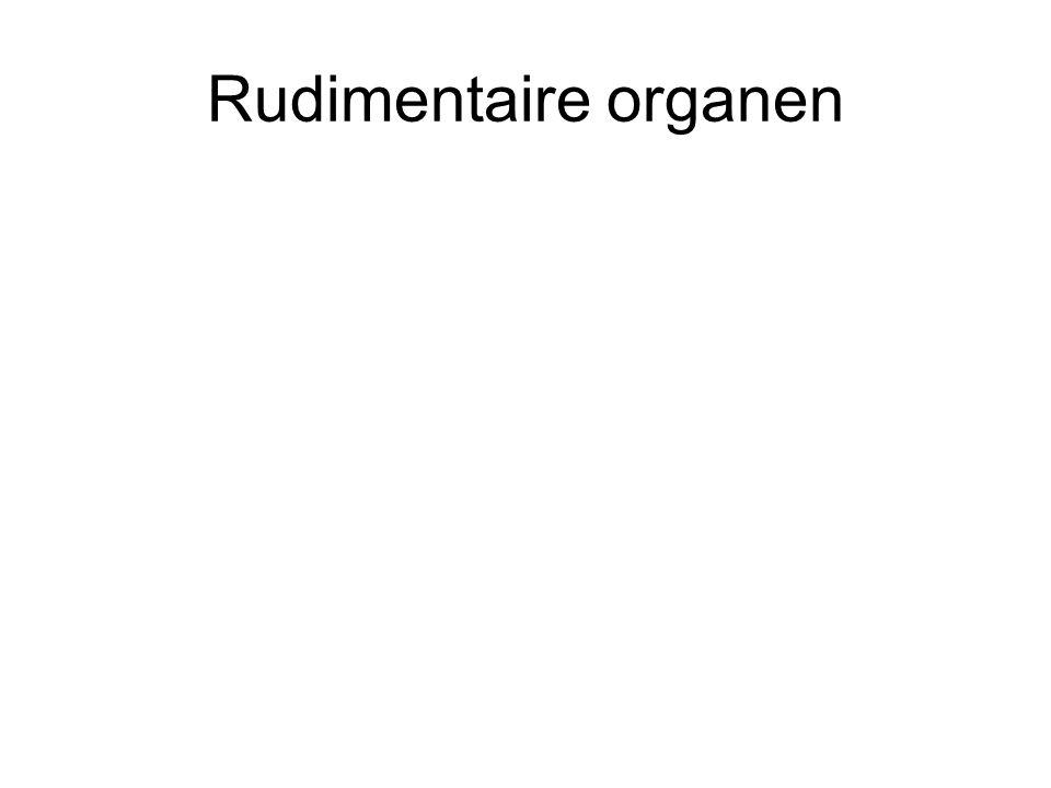 Rudimentaire organen