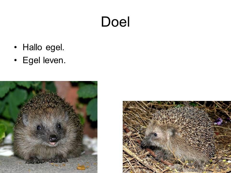 Egel Zoogdier –Tuin en bos Stekels 6000 Lengte 25 cm Staart 2 cm Hoogte 15 cm 4-6 jaar Leven alleen