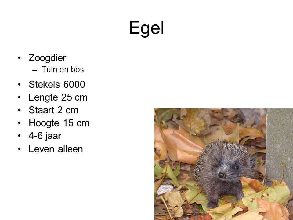 Wat eten egels.