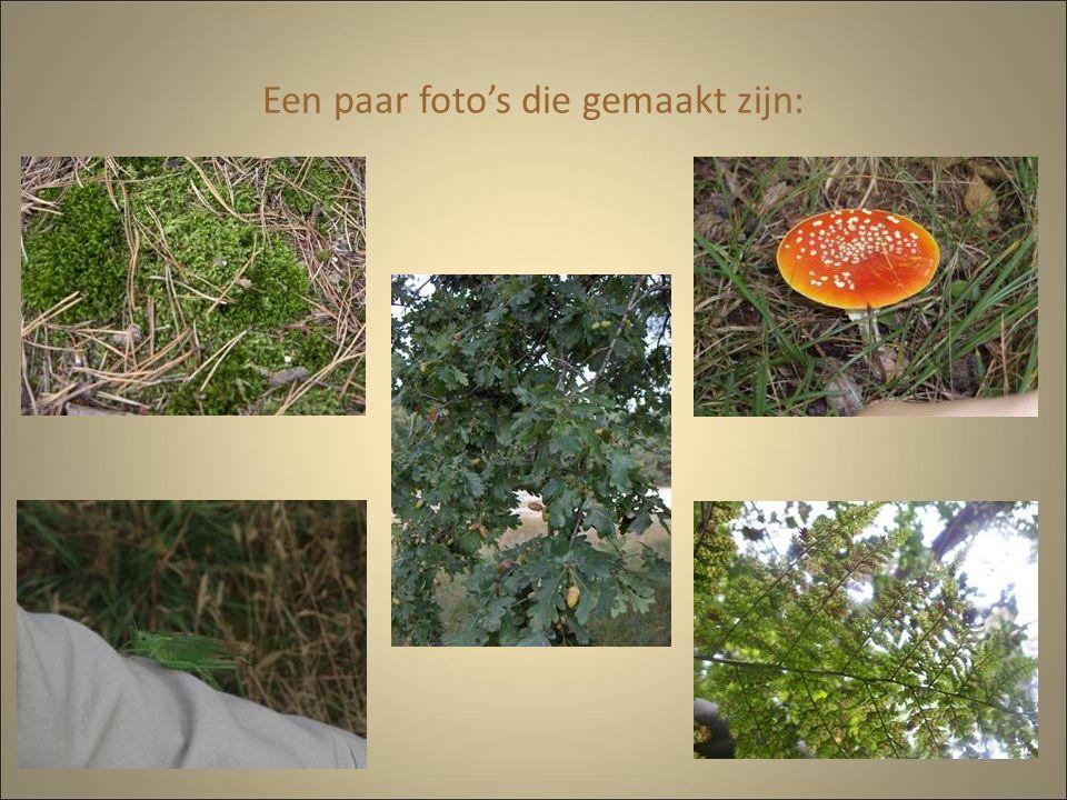 Een paar foto's die gemaakt zijn: