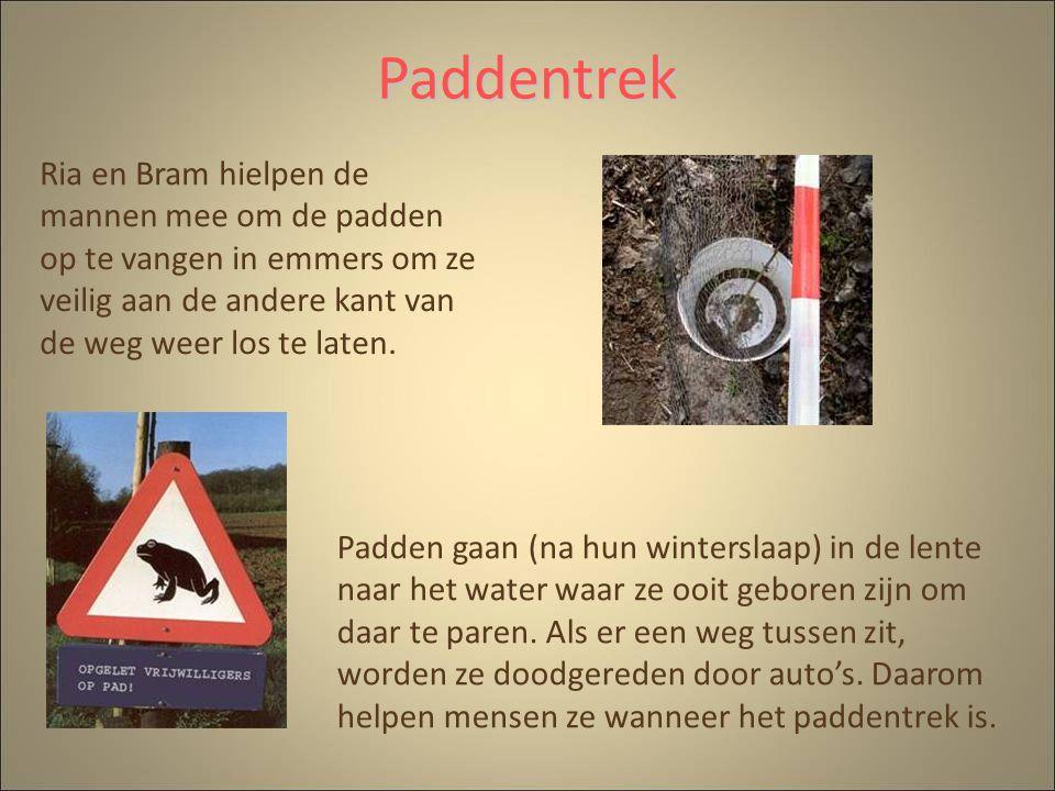 Paddentrek Padden gaan (na hun winterslaap) in de lente naar het water waar ze ooit geboren zijn om daar te paren. Als er een weg tussen zit, worden z