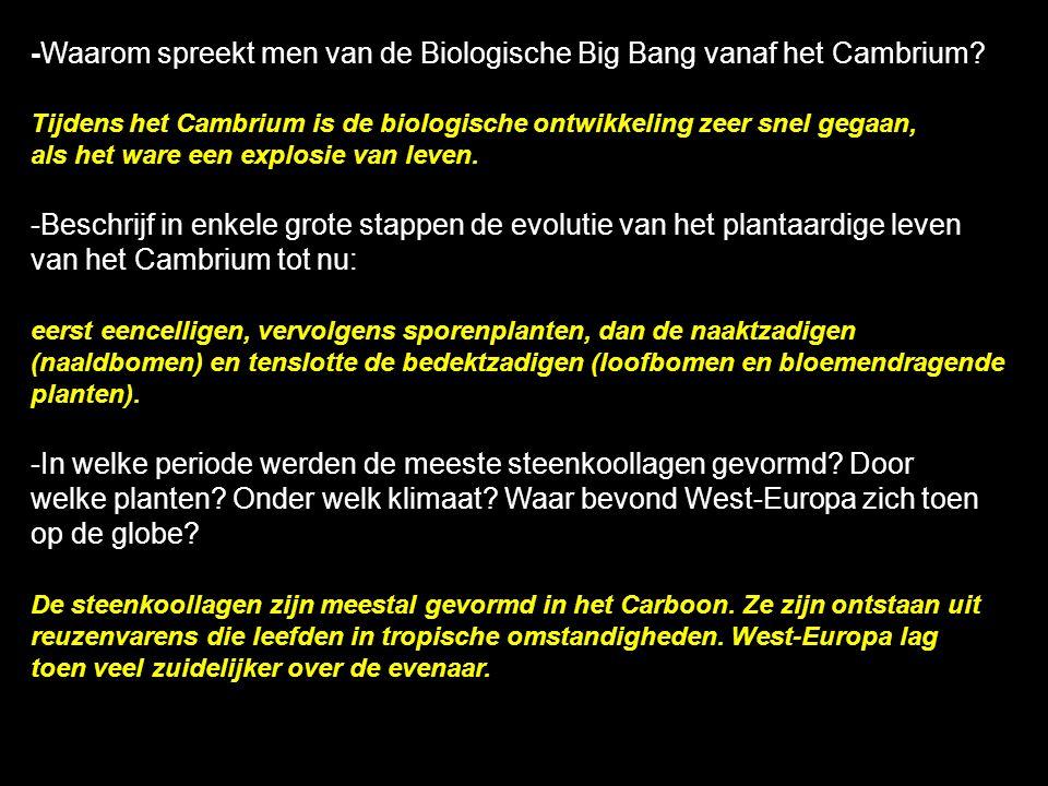 -Waarom spreekt men van de Biologische Big Bang vanaf het Cambrium? Tijdens het Cambrium is de biologische ontwikkeling zeer snel gegaan, als het ware