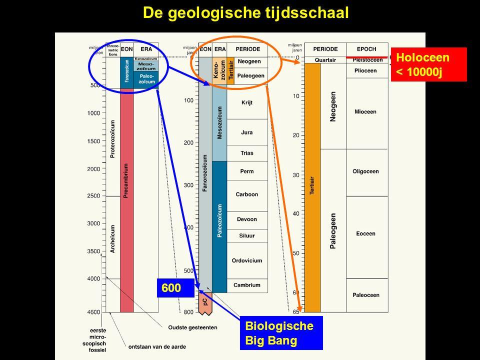 De geologische tijdsschaal Biologische Big Bang 600 Holoceen < 10000j